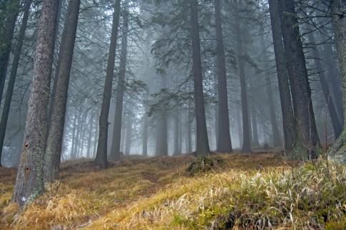 Warum ein milder Winter die Zecken vermehrt