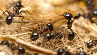 Ameisen Biss