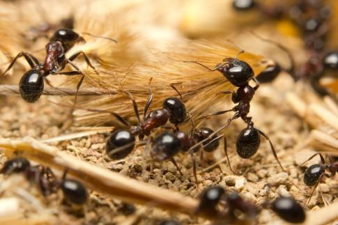 Erste Hilfe bei Ameisenbiss