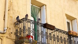 Tauben vertreiben - 5 Tipps zur Taubenabwehr
