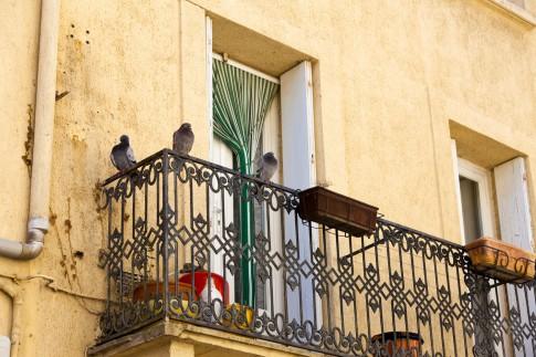 Tauben vertreiben – 5 Tipps zur Taubenabwehr